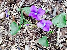 copy_of_SpringFlower.jpg